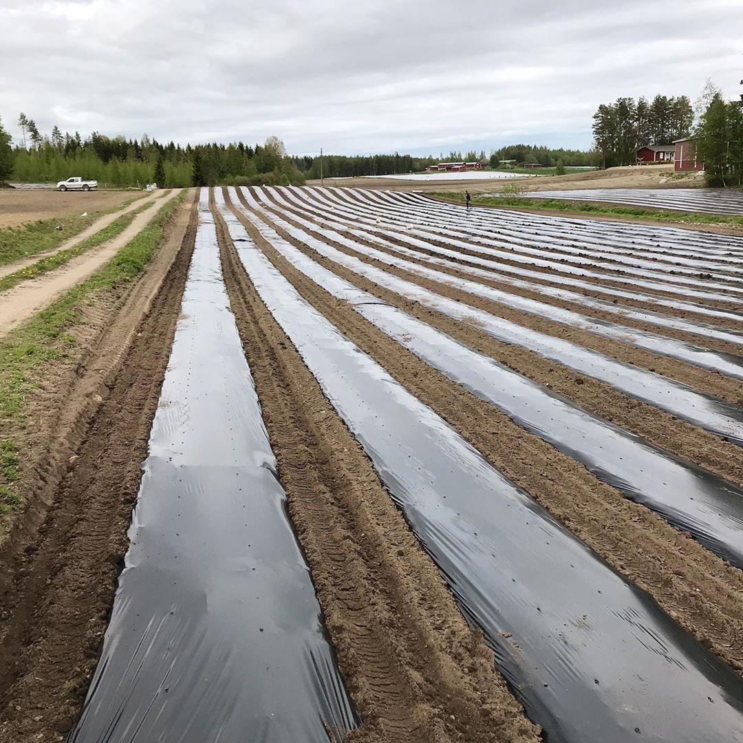 Màng phủ nông nghiệp màu đen