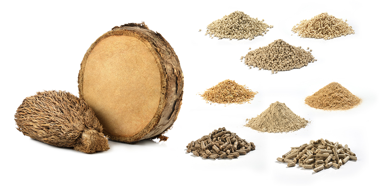Bioplastics are made from empty fruit bunches (EFB) from oil palm trees, rice husks